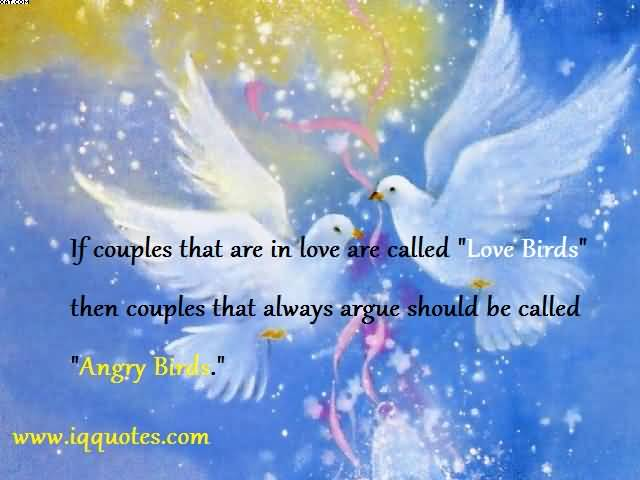 If Couples That Are In Love Are Called Love Birds Then Couples That Always Argue Should Be Called Angry Birds