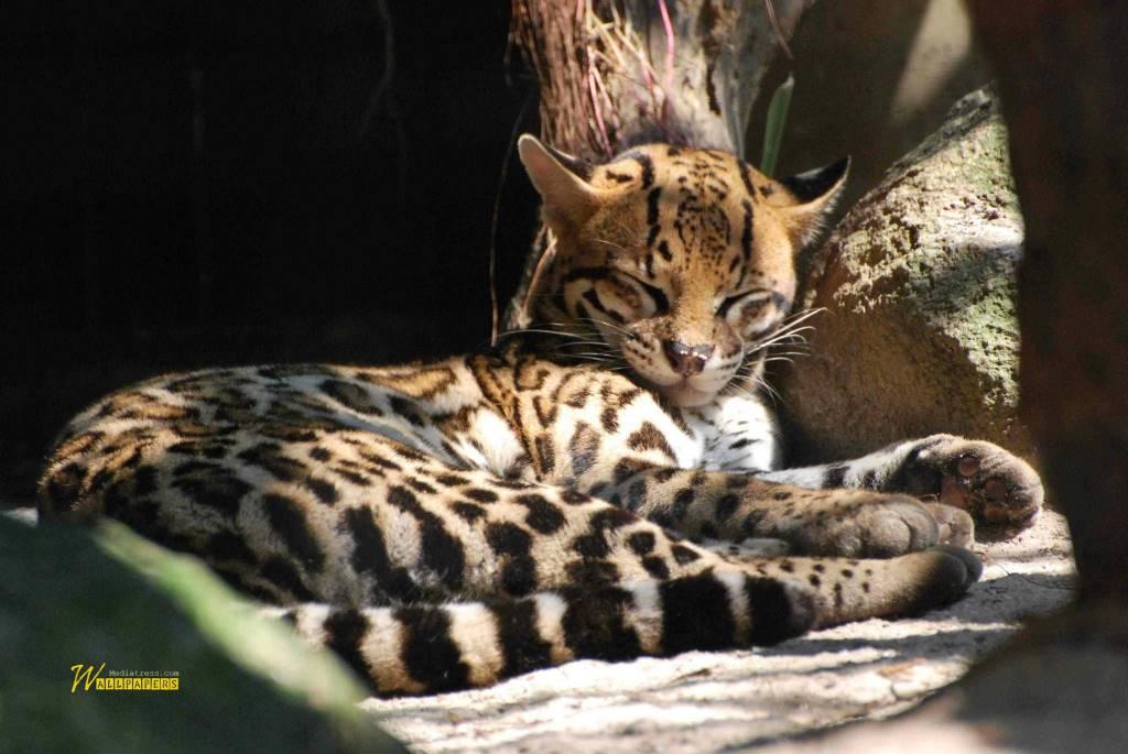 Very Cute Little Baby Tiger Full Hd Wallpaper