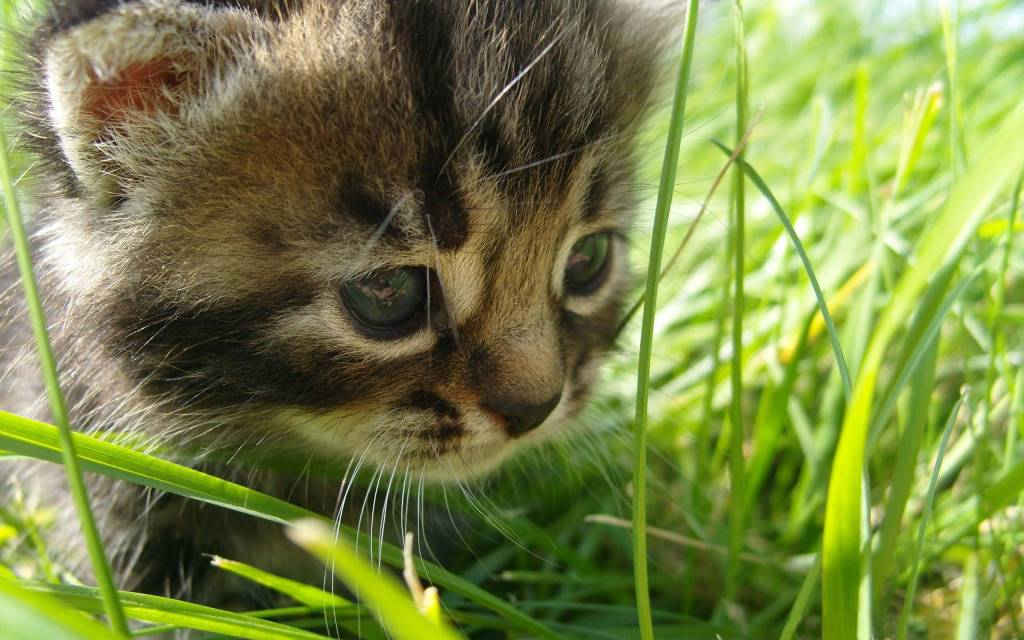 Very Cute Little Cat Looking For Something In The Ground Full Hd Wallpaper