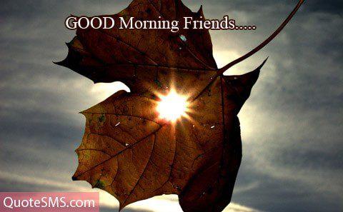 Amazing Good Morning Wishes Image