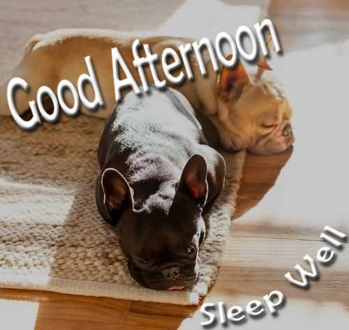 Cute Good Afternoon Wishes Image
