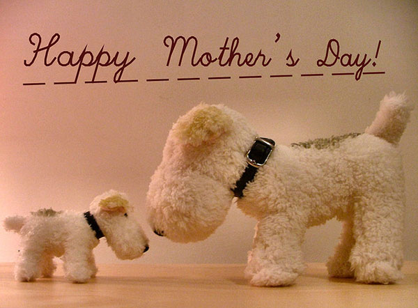 Cute Teddy Happy Mothers Day Wishes Image