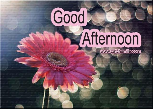 Fresh Flower Good Afternoon Greetings Image