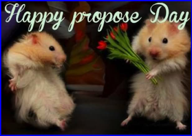 Funny Rat Propose Happy Propose Day