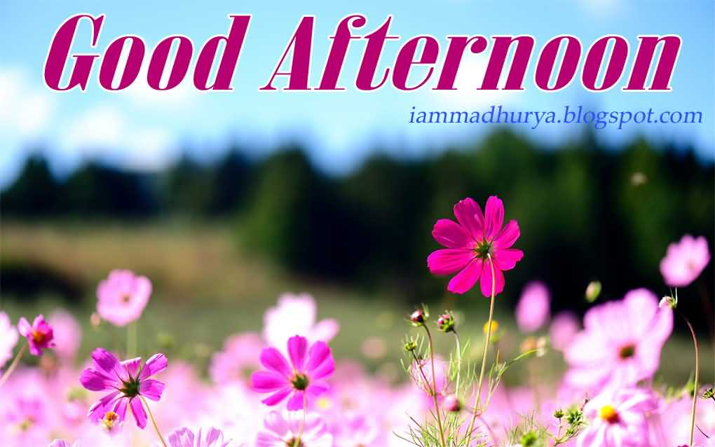 Good Afternoon Greetings Wallpaper