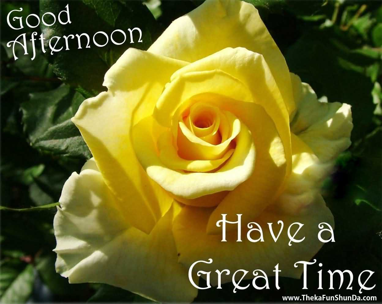 Good Afternoon Rose Greetings Image | Picsmine Good Afternoon Images With Roses