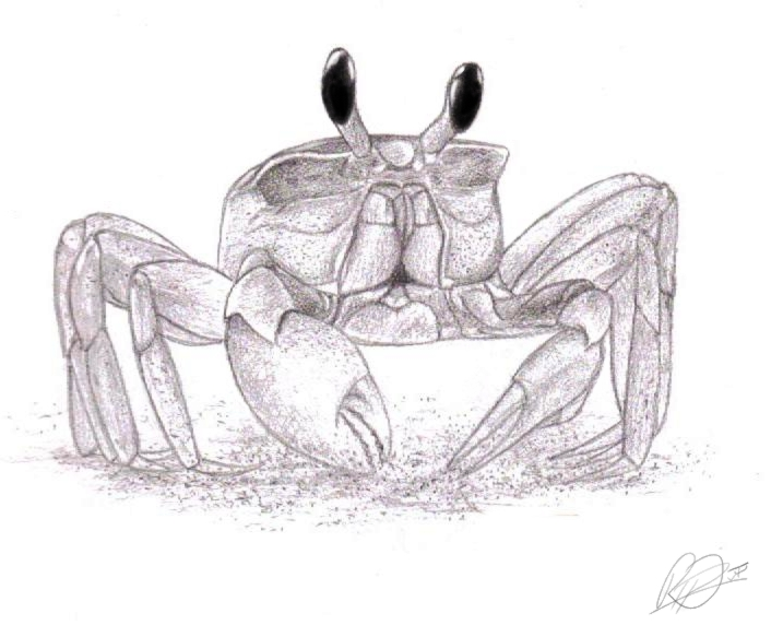 Great Black Color Ink Crab Tattoo Sketch For Girls