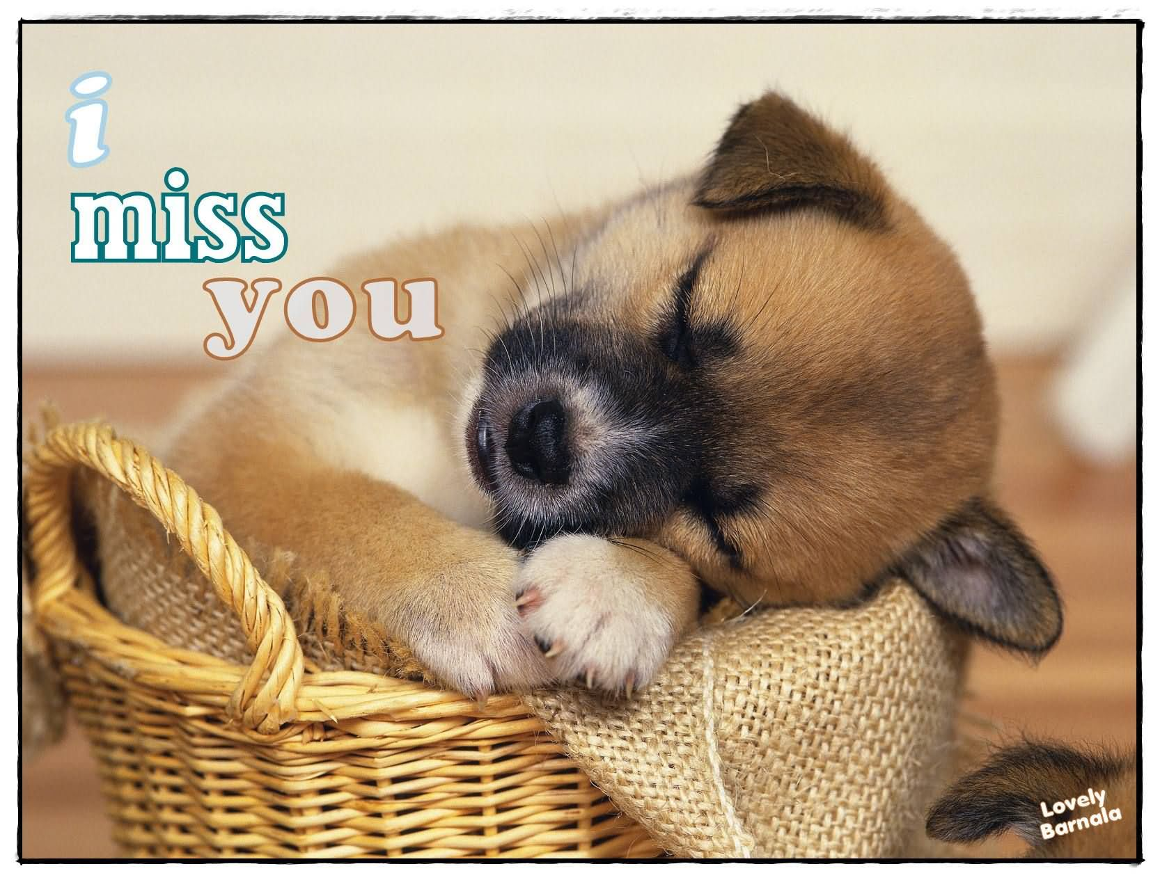 I Miss You Sleeping Puppy Image