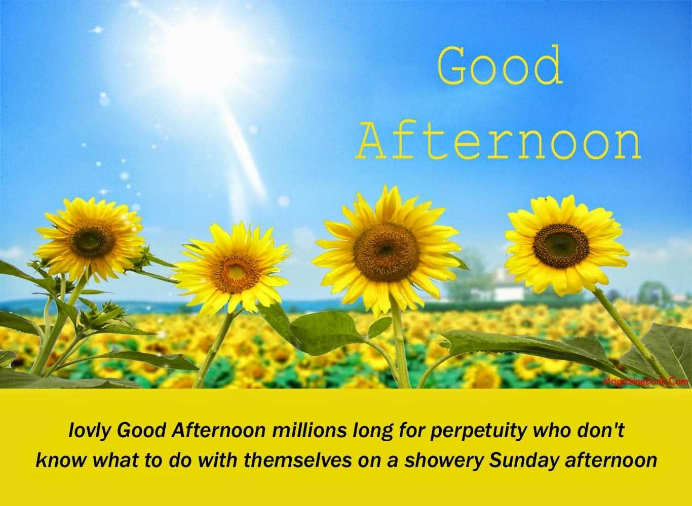 Lovely Good Afternoon Wishes Message Image