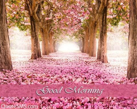 Lovely Good Morning Wishes Image