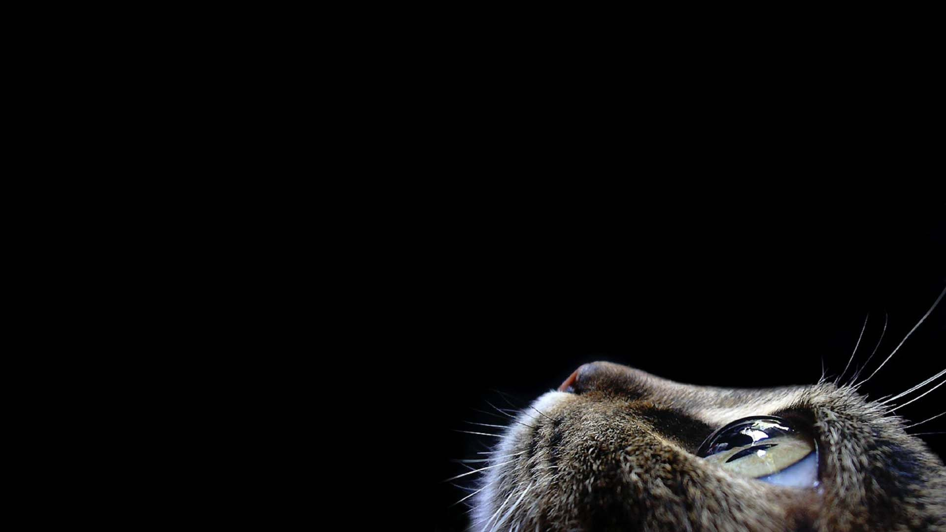Most Amazing Cat Seen To The Top On A Black Background 4K Wallpaper