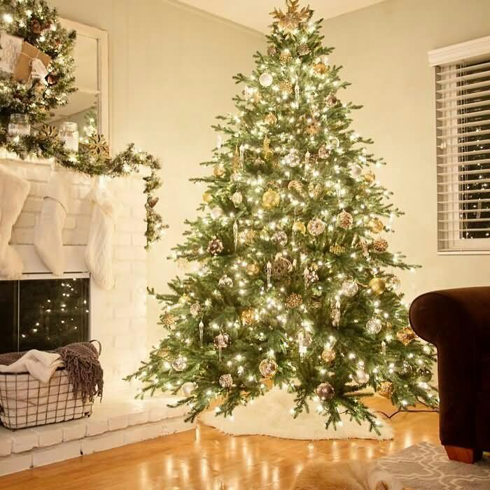 Most Amazing Christmas Tree With Awesome Lights