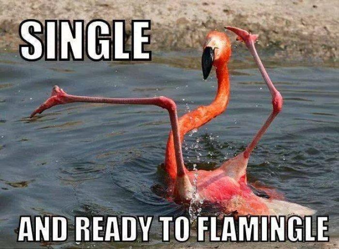 Single and ready to flamingle Funny Single Memes