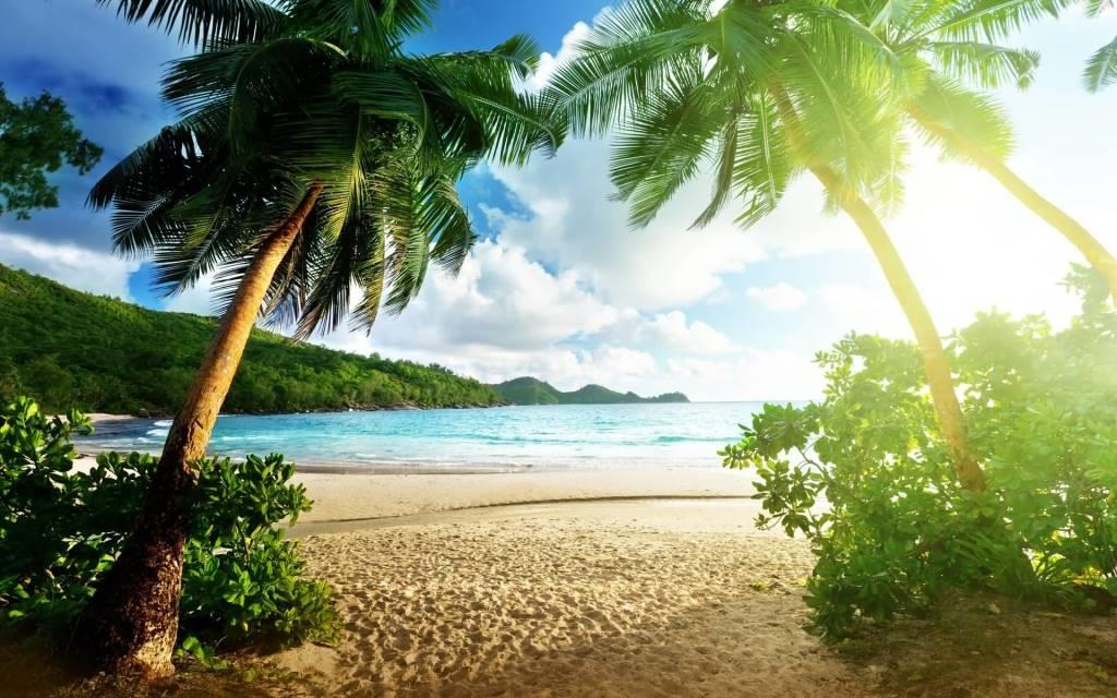 Unique Beach And Palm Trees Full HD Wallpaper