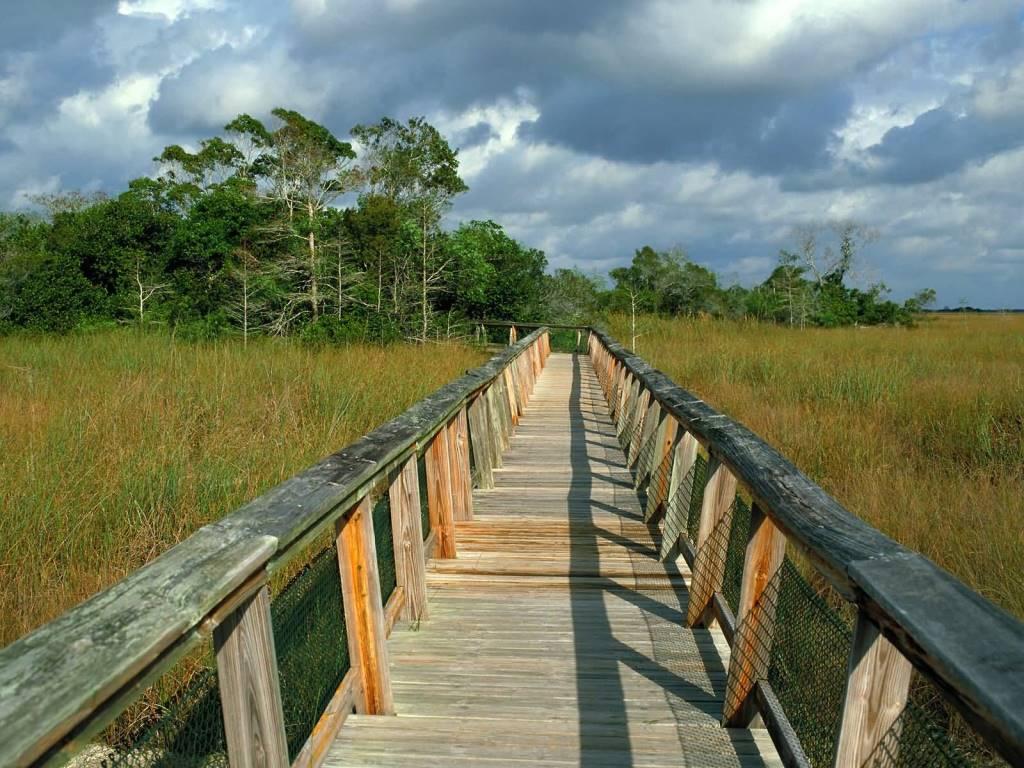 Unique Mahogany Hammock Trail Boardwalk, Everglades National Park Florida 4K Wallpaper