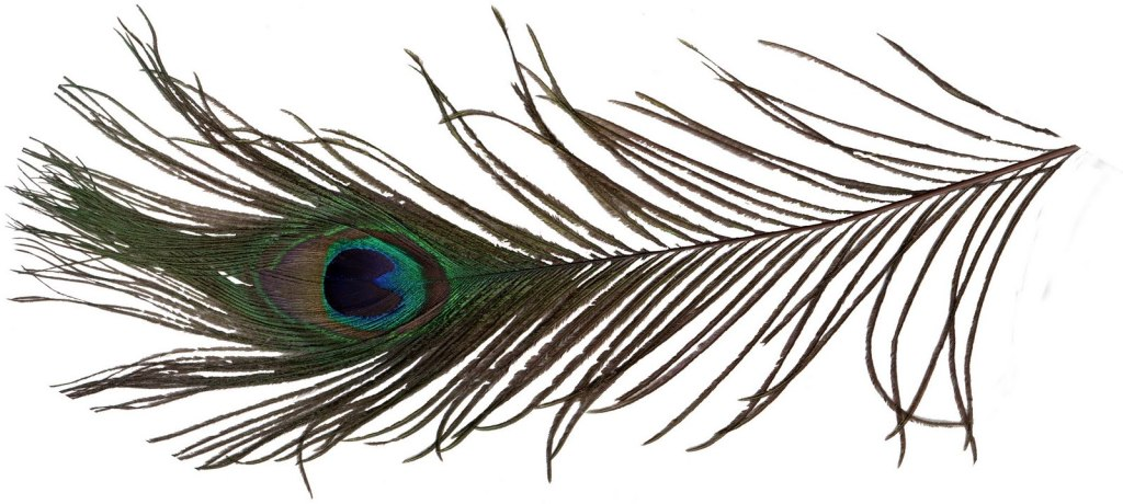 Famous Peacock Feather Tattoo Sample For Girls