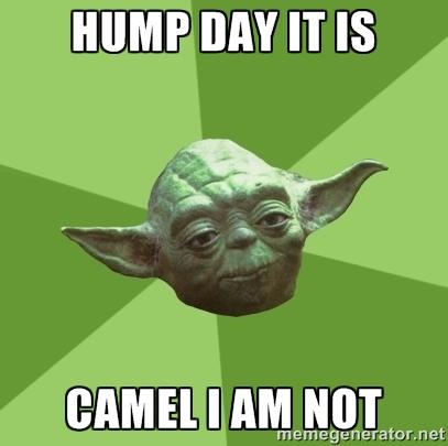 Hump Day Its Camel I Am not Meme Photo