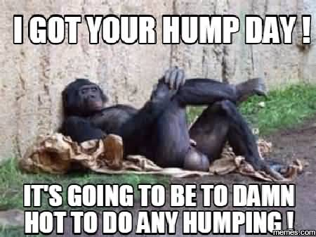I Got Your Hump Day its Going To Be To Damn Hot Do Any Humping Meme Picture