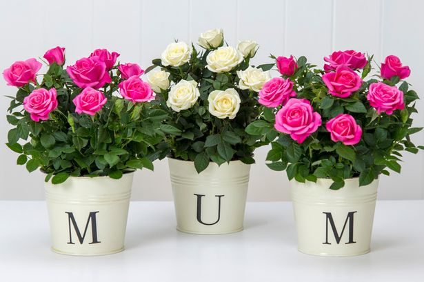 I Love You Mom Happy Mother's Day Wishes Image