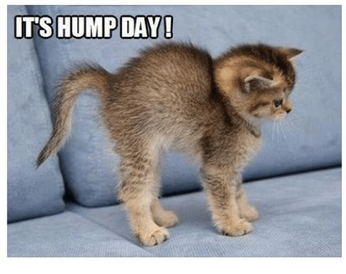 Its Hump Day Meme Picture