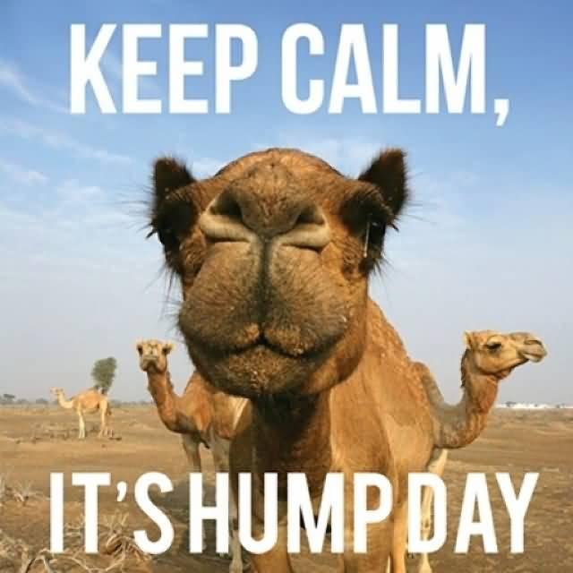Meme Keep calm Its Hump Day Image