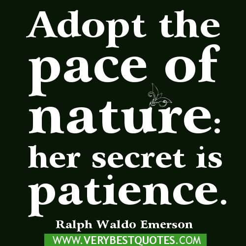 Patience Quotes adopt the pace of nature her secret is patience