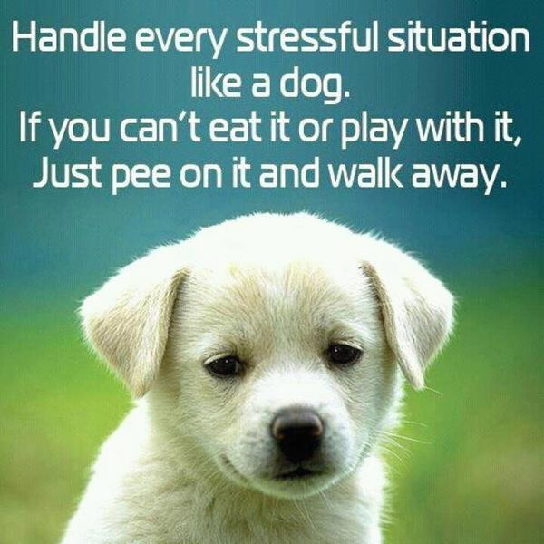 Stress Quotes handle every stressful situation like a dog. if you can't eat it or play with it, just pee on it and walk away...