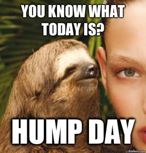 You Know What Today Is Hump Day Meme Meme Image