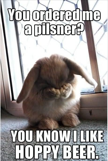 You Ordered Me A Pilsner You Know i Like Hoppy Beer Funny Beer Memes