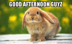 Good Afternoon Memes good afternoon guyz