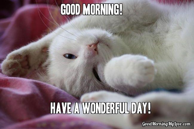 Good Morning Meme good morning have a wonderful day