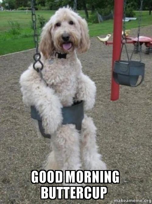 Good Morning Memes good morning buttercup
