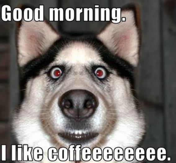 Good Morning Memes good morning i like coffeeeeee