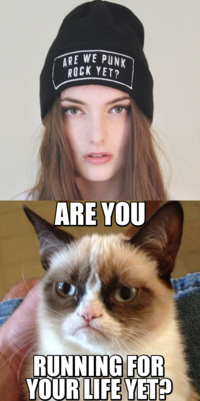 Funny Grumpy Cat Meme Are You Running For Your