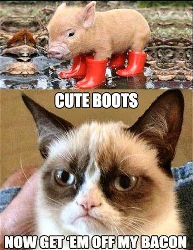 Grumpy Cat Memes Cute Boots Now Get