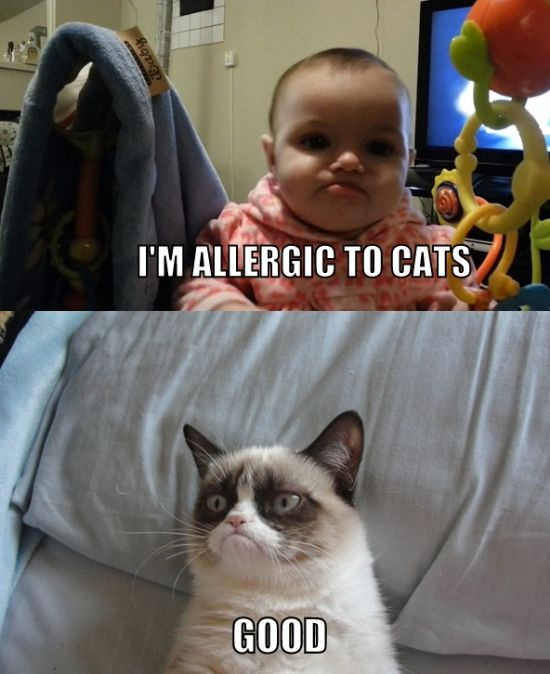 Grumpy Cat Memes I'm Allergic To Cats