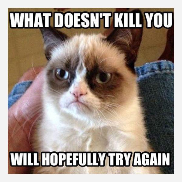 Grumpy Cat Memes What Doesn't Kill You