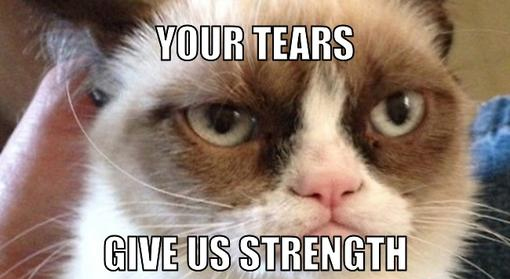 Grumpy Cat Memes Your Tears Give Us Strength