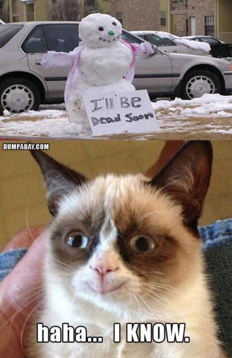 Haha I Know Grumpy Cat Memes