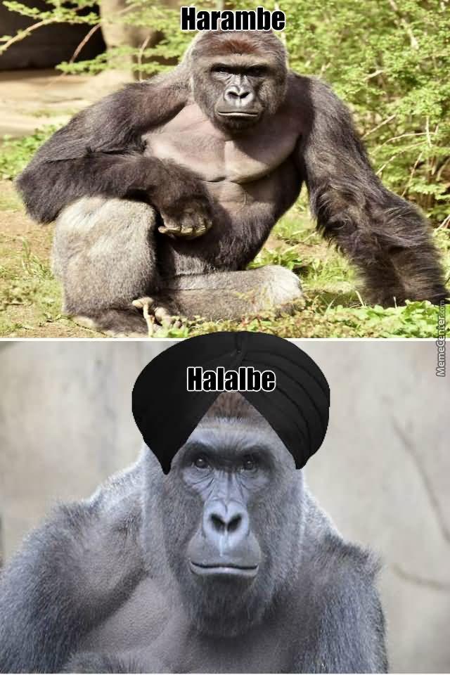 harambe halalbe harambe meme