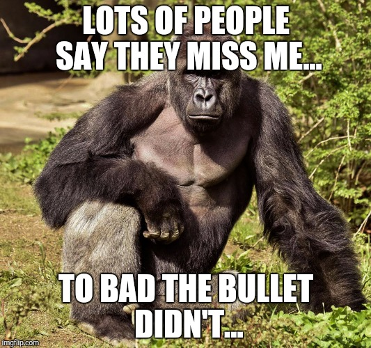 Harambe Memes Lots Of People Say They Miss Me | Picsmine