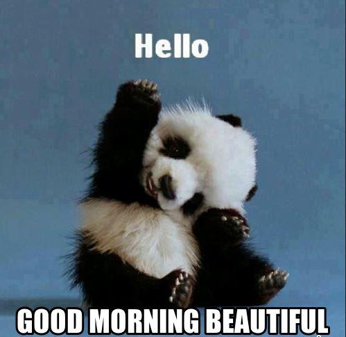 Hello good morning beautiful Good Morning Meme