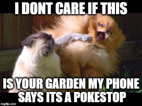 I Don't Care If This Is Your Garden My Phone Says Its A Pokestop Go Meme