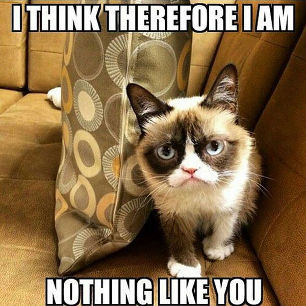 I Think Therefore I Am Grumpy Cat Memes