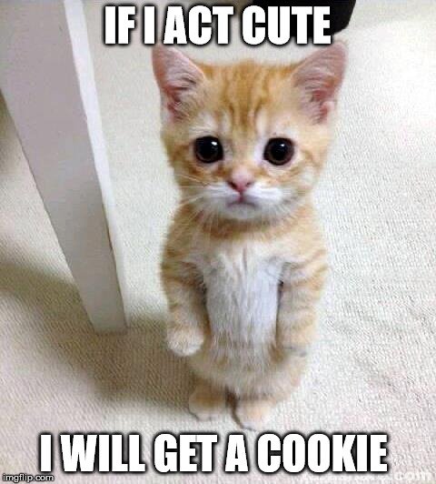 If act cute i will get a cookie Funny Cookie Meme
