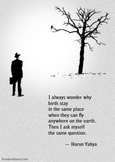 Interesting Quotes i always wonder why birds stay in the same place when they