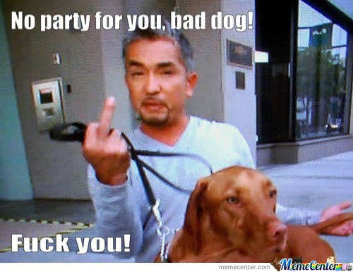 No party for you bad dog fuck you Funny Party Meme