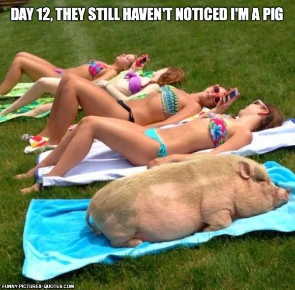 Porky Pig Quotes day 12 they still haven't noticed I'm a pig