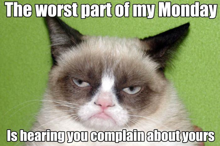 The Worst Part Of My Grumpy Cat Memes