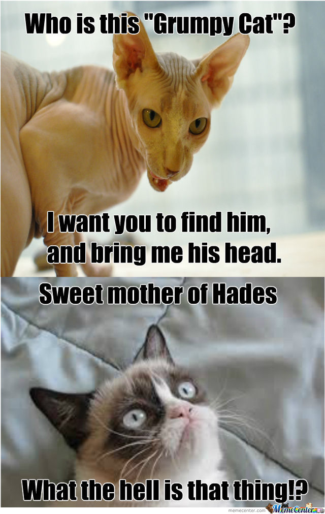Who Is This Grumpy Cat Grumpy Cat Memes